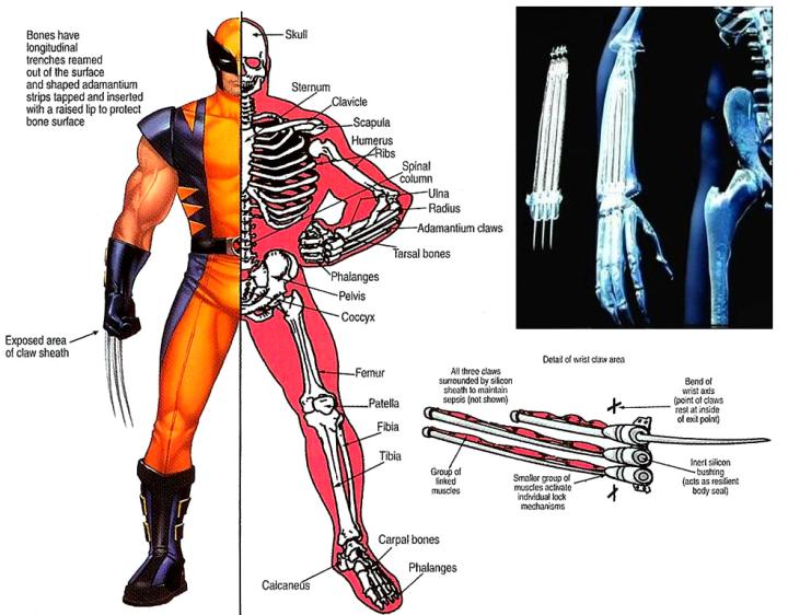 Wolverines%20Adamantium%20Skeleton%202